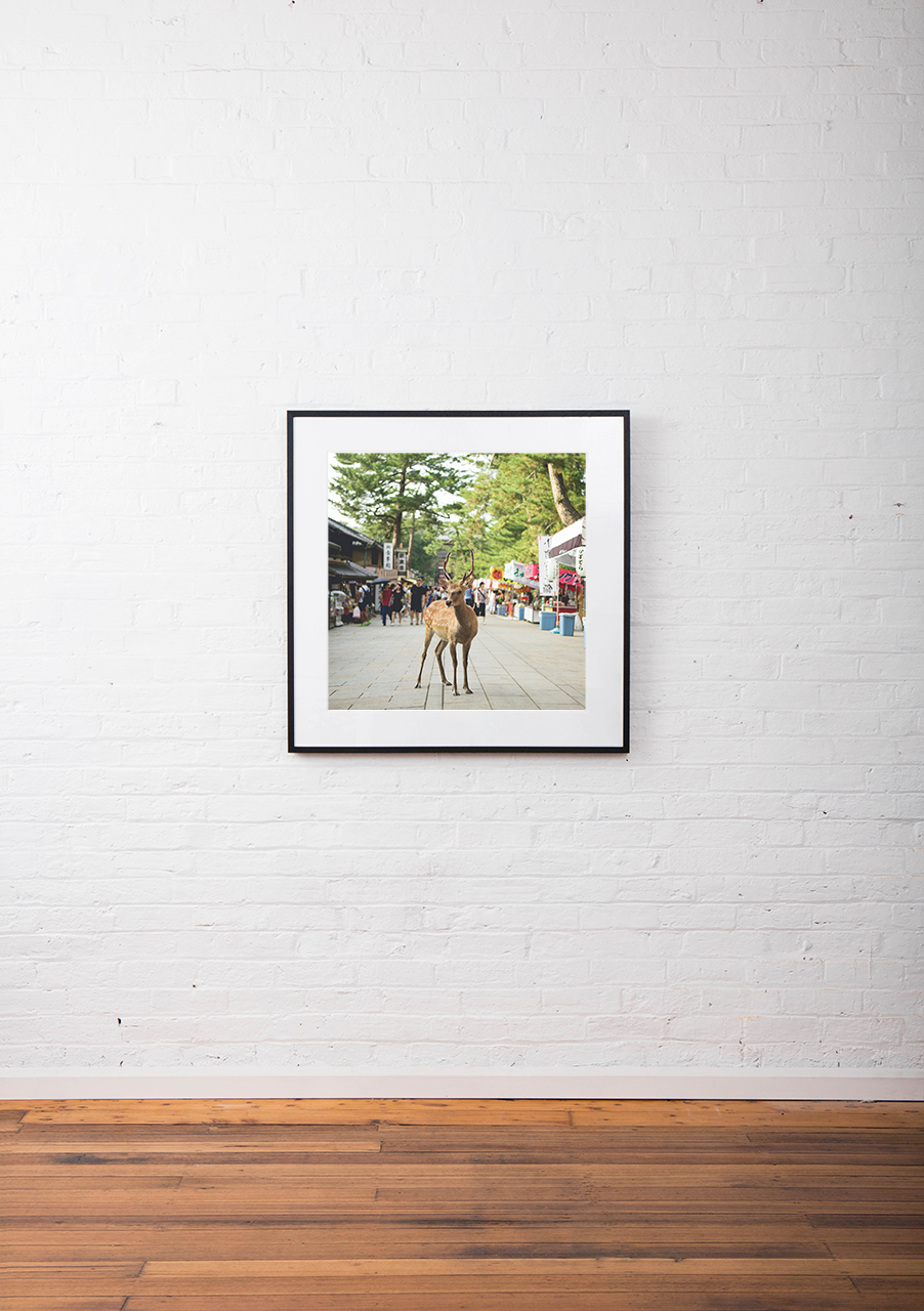 Photo of a deer in street in Urban Japan framed in black on white wall