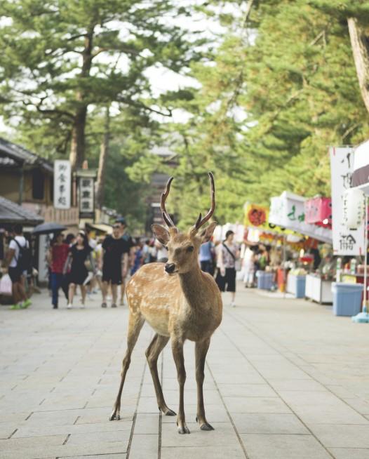 Photo of a deer in street in Urban Japan