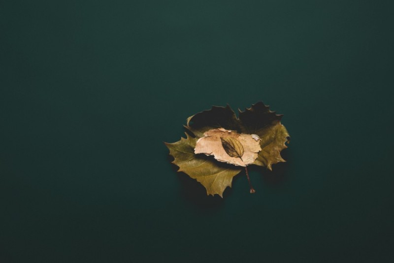 Leaf Photography Print