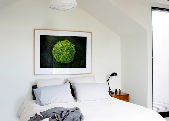 A areial photographic print of the top of a green tree with dark background taken by Elizabeth Bull on bedroom wall