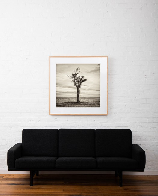 Black and white photo of Australian Landscape of fields and trees framed in raw timber on white wall above sofa