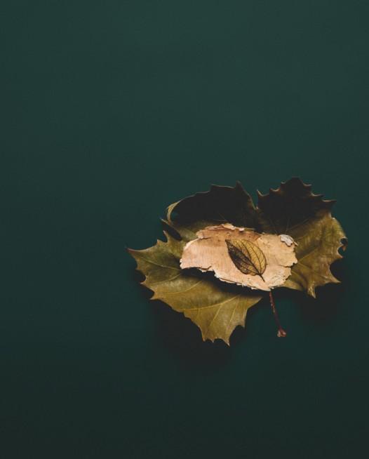 MLOBO Autumn Finds