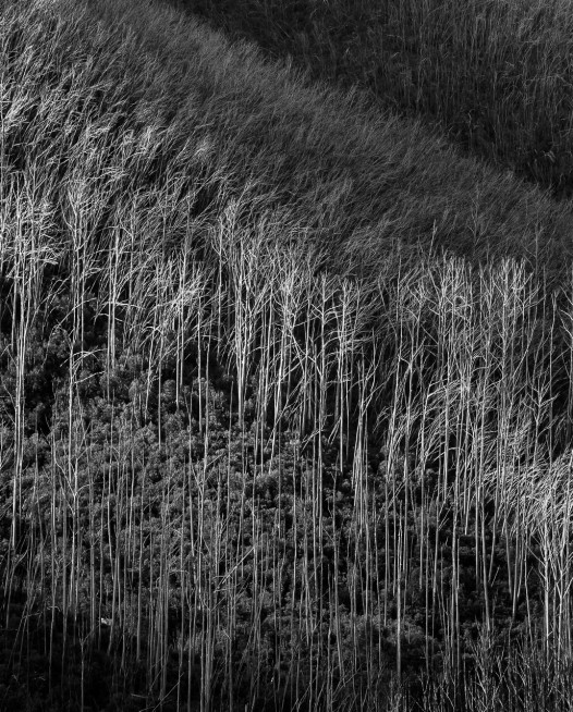 Black and white photographic art print of Ausrtalia landscape of trees by Paul Hoelen