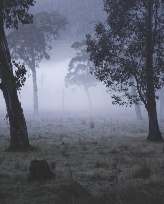 Australian Landscape photograh of trees in a misty/foggy day