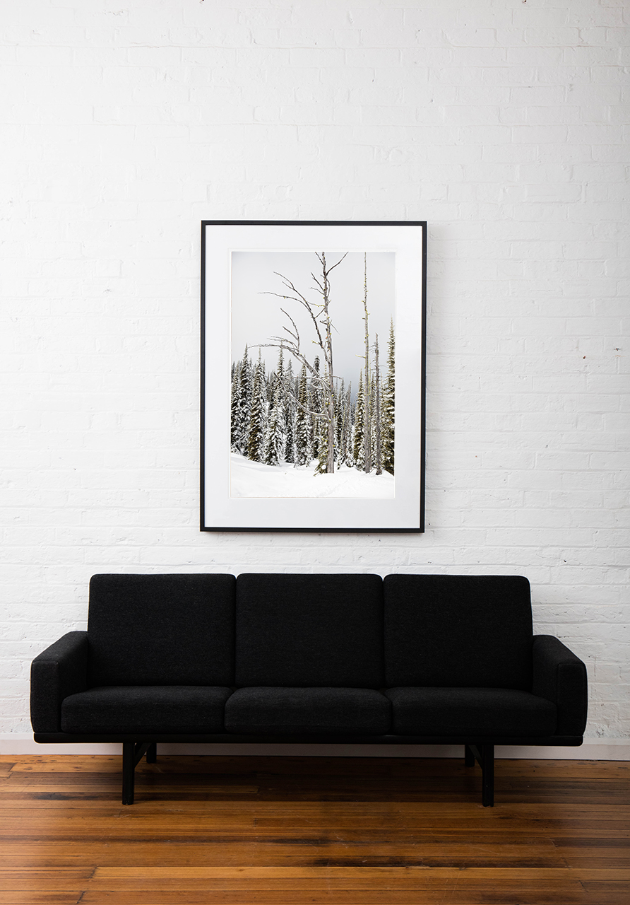 A large vertical Landscape photo taken in North America of snow and trees in shade of green , black and white framed in black timber on white wall above sofa