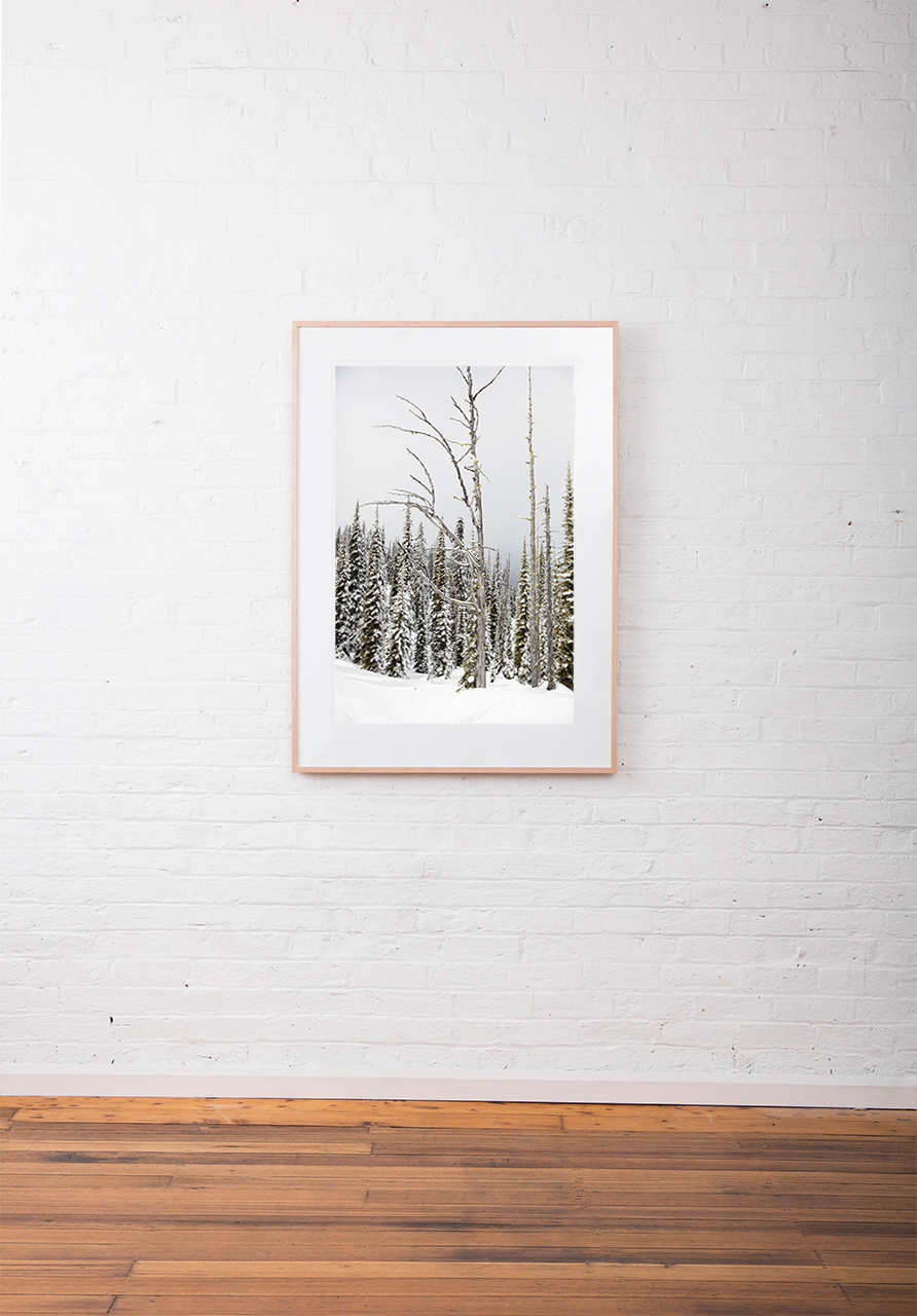 A large vertical Landscape photo taken in North America of snow and trees in shade of green , black and white framed in raw timber on white wall
