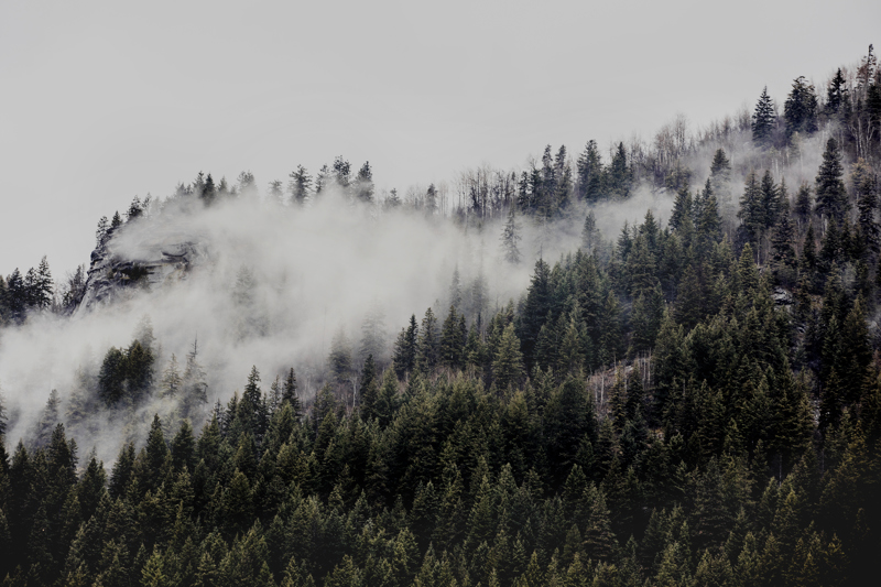 Photographic Art Print of misty foggy Canadian landscape of moutains and trees
